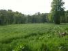 A Fields